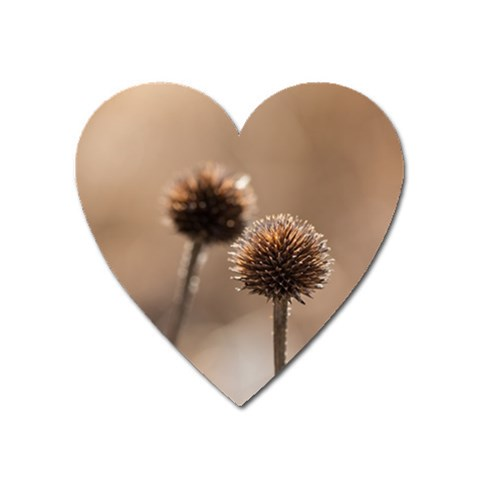 Withered Globe Thistle In Autumn Macro Heart Magnet