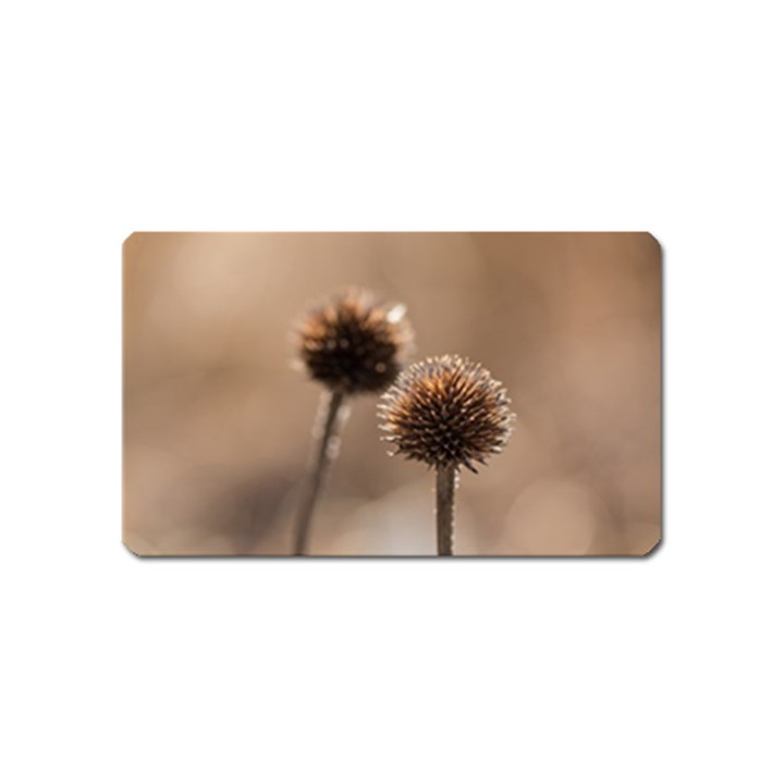 Withered Globe Thistle In Autumn Macro Magnet (Name Card)