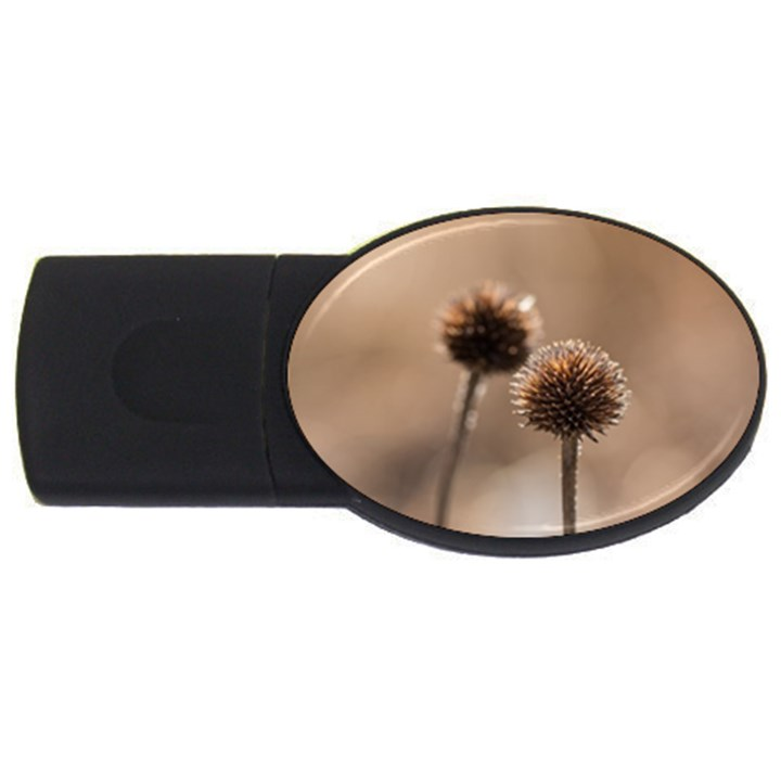 Withered Globe Thistle In Autumn Macro USB Flash Drive Oval (1 GB)