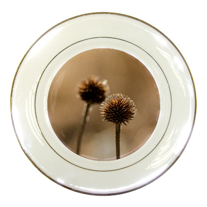 Withered Globe Thistle In Autumn Macro Porcelain Plates
