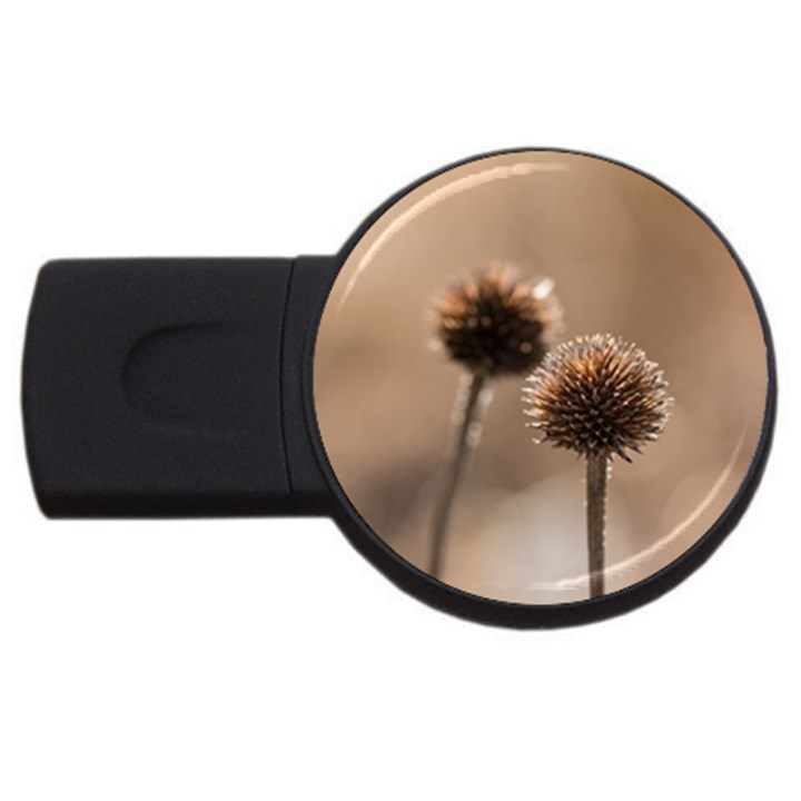 Withered Globe Thistle In Autumn Macro USB Flash Drive Round (4 GB)