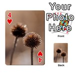 Withered Globe Thistle In Autumn Macro Playing Cards 54 Designs  Front - Heart4