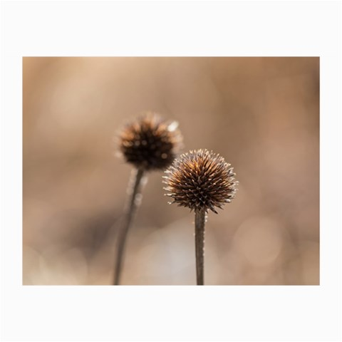 Withered Globe Thistle In Autumn Macro Collage Prints