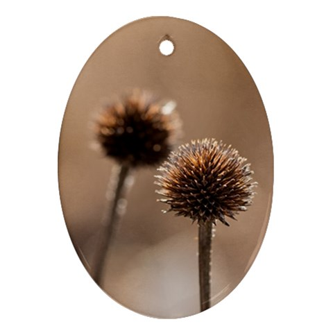 Withered Globe Thistle In Autumn Macro Oval Ornament (Two Sides)