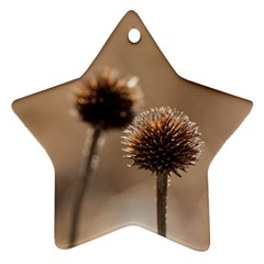 Withered Globe Thistle In Autumn Macro Star Ornament (Two Sides)