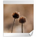 Withered Globe Thistle In Autumn Macro Canvas 8  x 10  10.02 x8 Canvas - 1