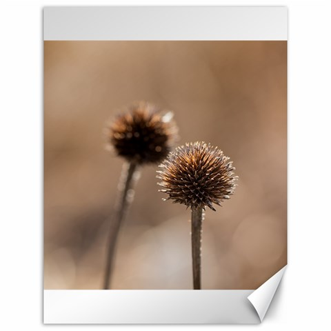 Withered Globe Thistle In Autumn Macro Canvas 12  x 16