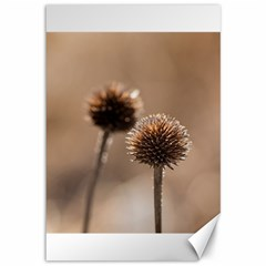 Withered Globe Thistle In Autumn Macro Canvas 12  X 18