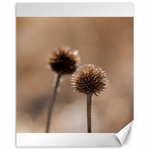 Withered Globe Thistle In Autumn Macro Canvas 16  x 20