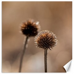 Withered Globe Thistle In Autumn Macro Canvas 20  X 20
