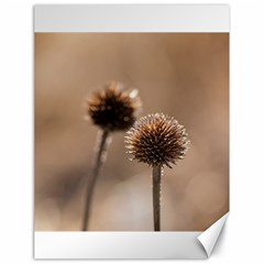 Withered Globe Thistle In Autumn Macro Canvas 18  X 24