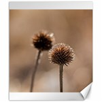 Withered Globe Thistle In Autumn Macro Canvas 20  x 24   24 x20 Canvas - 1