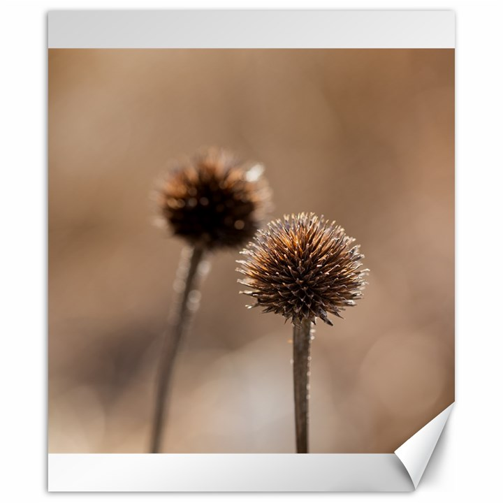 Withered Globe Thistle In Autumn Macro Canvas 20  x 24