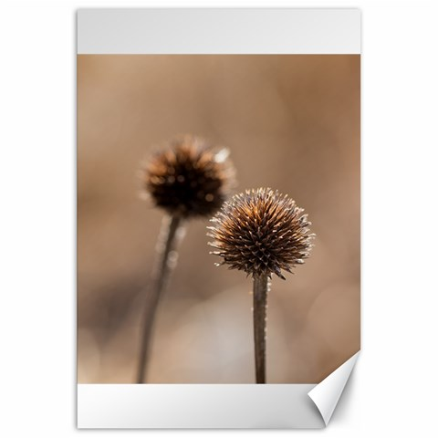 Withered Globe Thistle In Autumn Macro Canvas 20  x 30