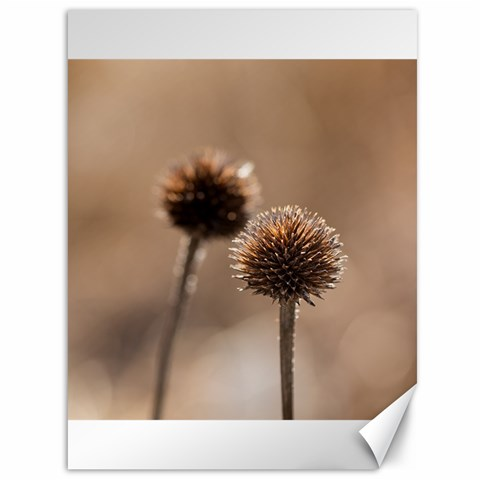 Withered Globe Thistle In Autumn Macro Canvas 36  x 48