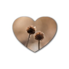 Withered Globe Thistle In Autumn Macro Rubber Coaster (Heart)