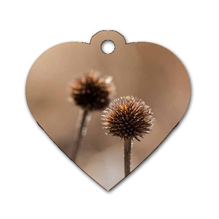 Withered Globe Thistle In Autumn Macro Dog Tag Heart (Two Sides)
