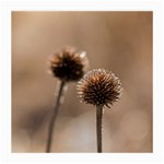 Withered Globe Thistle In Autumn Macro Medium Glasses Cloth Front