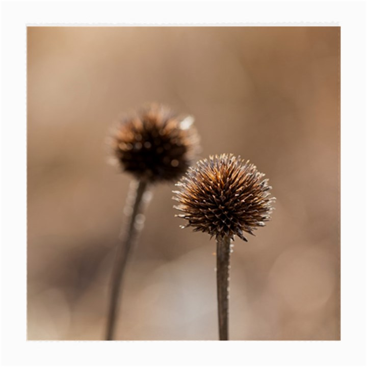 Withered Globe Thistle In Autumn Macro Medium Glasses Cloth (2-Side)