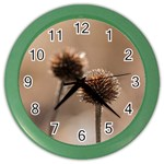 Withered Globe Thistle In Autumn Macro Color Wall Clocks Front