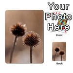 Withered Globe Thistle In Autumn Macro Multi-purpose Cards (Rectangle)  Back 18