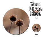 Withered Globe Thistle In Autumn Macro Multi-purpose Cards (Round)  Back 50