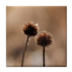 Withered Globe Thistle In Autumn Macro Face Towel