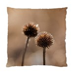 Withered Globe Thistle In Autumn Macro Standard Cushion Case (Two Sides) Back