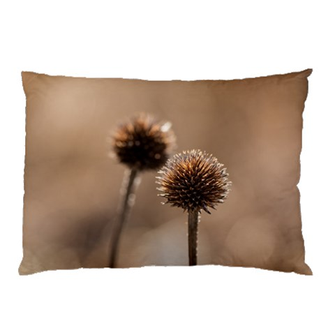 Withered Globe Thistle In Autumn Macro Pillow Case