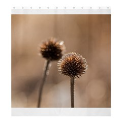Withered Globe Thistle In Autumn Macro Shower Curtain 66  x 72  (Large)