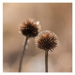 Withered Globe Thistle In Autumn Macro Small Memo Pads 3.75 x3.75  Memopad