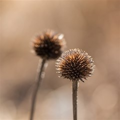 Withered Globe Thistle In Autumn Macro Magic Photo Cubes