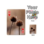Withered Globe Thistle In Autumn Macro Playing Cards 54 (Mini)  Front - Heart10