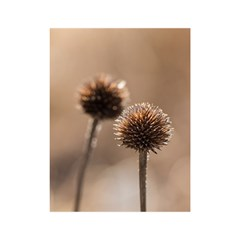 Withered Globe Thistle In Autumn Macro Shower Curtain 48  X 72  (small)