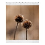 Withered Globe Thistle In Autumn Macro Shower Curtain 60  x 72  (Medium)  60 x72 Curtain
