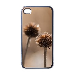 Withered Globe Thistle In Autumn Macro Apple iPhone 4 Case (Black)