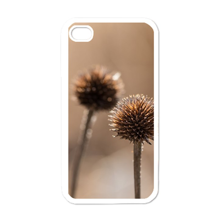 Withered Globe Thistle In Autumn Macro Apple iPhone 4 Case (White)
