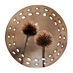 Withered Globe Thistle In Autumn Macro Round Filigree Ornament (2Side) Back