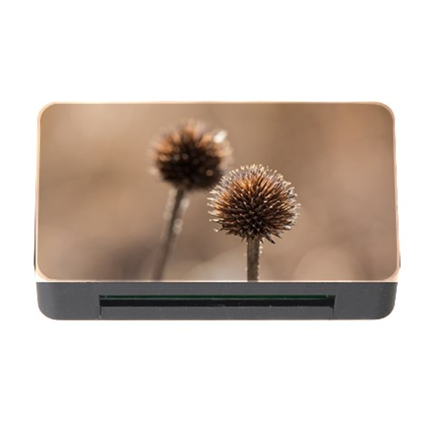 Withered Globe Thistle In Autumn Macro Memory Card Reader with CF