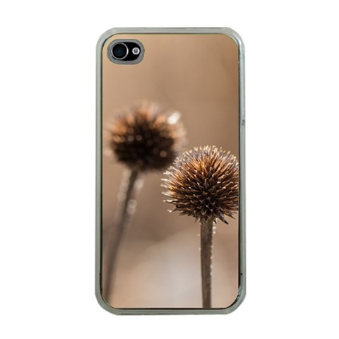 Withered Globe Thistle In Autumn Macro Apple iPhone 4 Case (Clear)