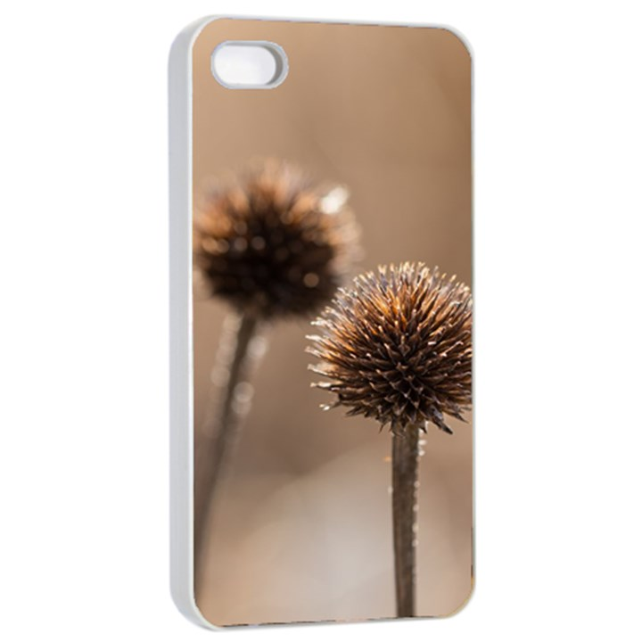 Withered Globe Thistle In Autumn Macro Apple iPhone 4/4s Seamless Case (White)
