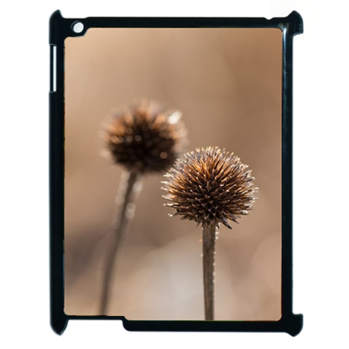 Withered Globe Thistle In Autumn Macro Apple iPad 2 Case (Black)
