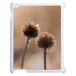 Withered Globe Thistle In Autumn Macro Apple iPad 2 Case (White) Front