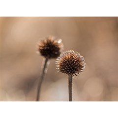 Withered Globe Thistle In Autumn Macro Birthday Cake 3d Greeting Card (7x5)
