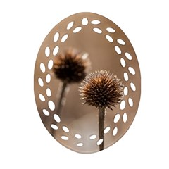 Withered Globe Thistle In Autumn Macro Oval Filigree Ornament (2 Side)
