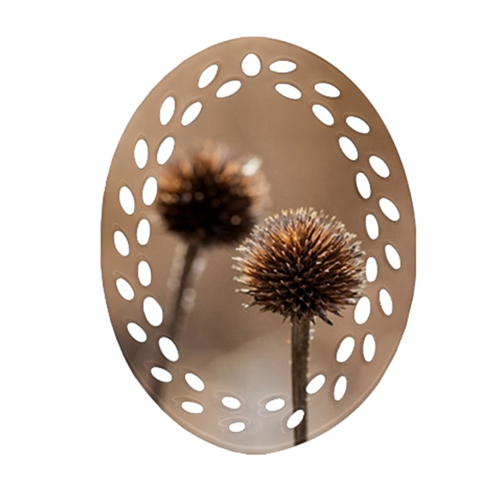 Withered Globe Thistle In Autumn Macro Oval Filigree Ornament (2-Side)