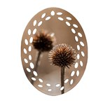 Withered Globe Thistle In Autumn Macro Oval Filigree Ornament (2-Side)  Back