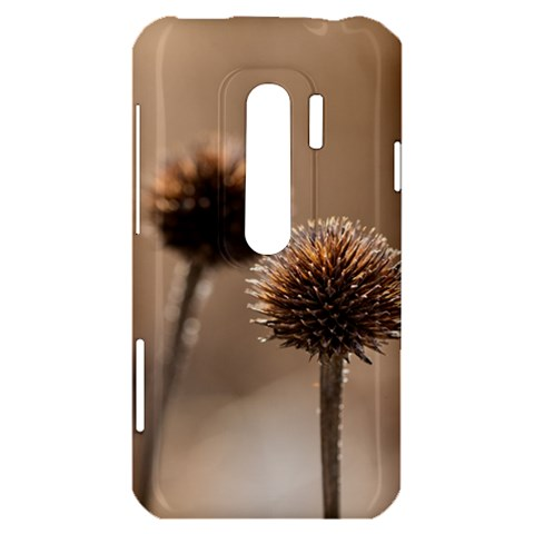 Withered Globe Thistle In Autumn Macro HTC Evo 3D Hardshell Case