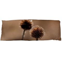 Withered Globe Thistle In Autumn Macro Body Pillow Case (Dakimakura)
