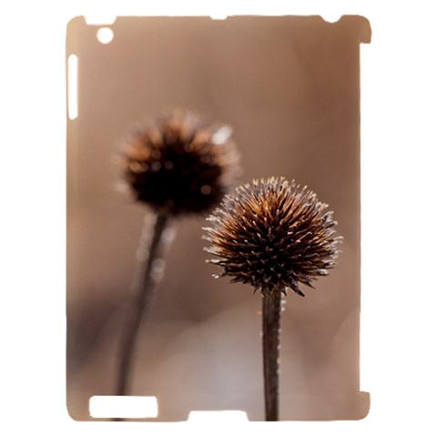 Withered Globe Thistle In Autumn Macro Apple iPad 2 Hardshell Case (Compatible with Smart Cover)